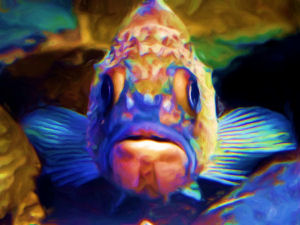 Fish at Newport Aquarium